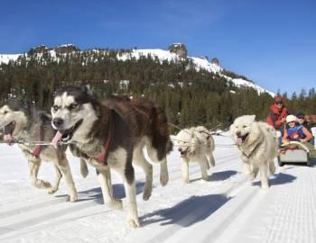 Winter Adventure Tours