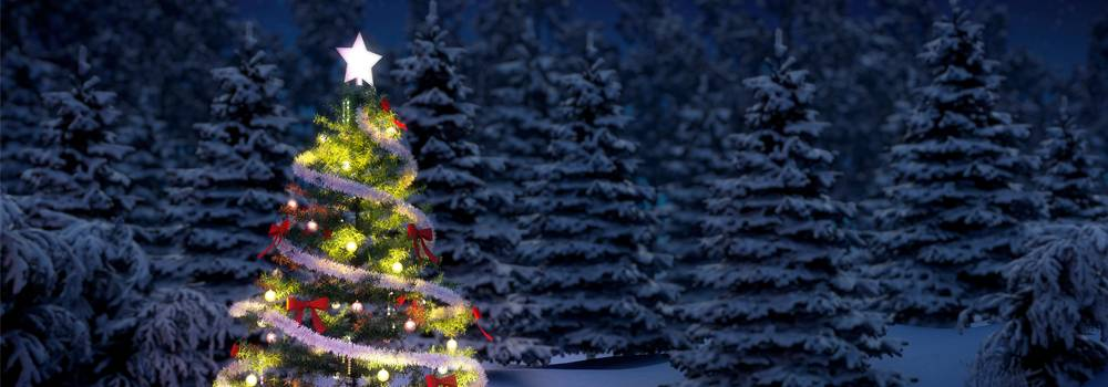 Christmas Tree and Holiday Decorations - Summit Home Services