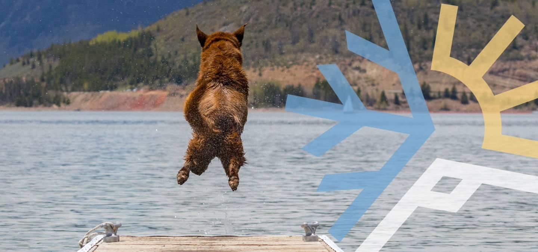 Dog Diving Into Lake Dillon