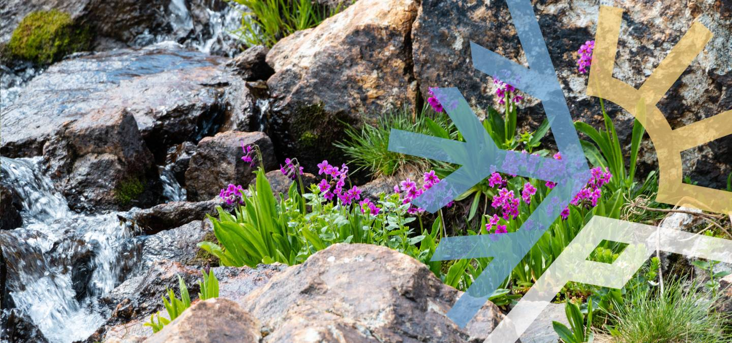 Mountain Spring with Flowers