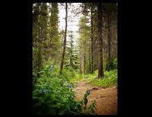 Breckenridge Hikes