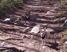 Peaks Trail